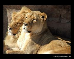 Father and Son by Shantella