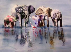 The final Elephants... by GeocachingOdder
