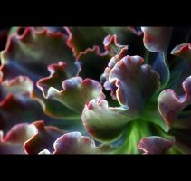 Succulent Dreams by Vividlight