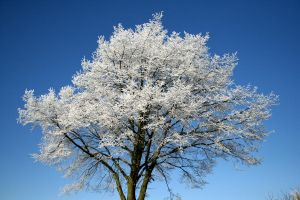 Blue Background White Tree by demonS4