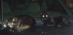 Evil Looking Catz by ChickenChasser