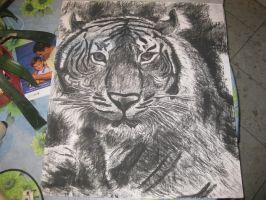 Charcoal: Tiger 'Diego' :D by Indiana8Jones