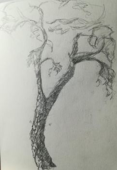 Outdoor sketch of a tree #2 by Andrix9743