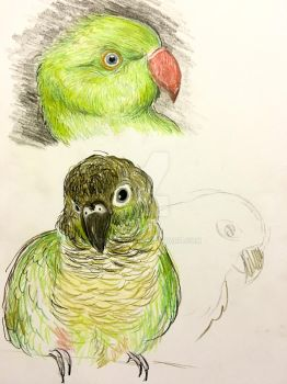Sketching cute parrots by Dona4ever