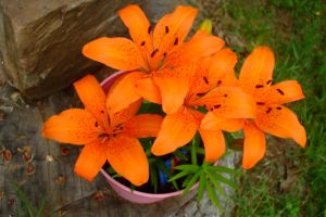 Orange Lillies by EruwaedhielElleth
