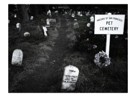 Pet Cemetary by MrGlory