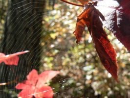 Fall Webbing by igguana578