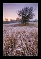 Frosted Dawn by henroben