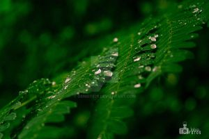 Drops in green by geniote26