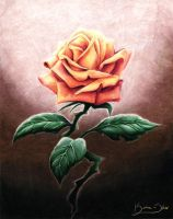 Rose for a Rose by auxeru