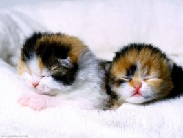 Funny Cuties by diggwallpapers