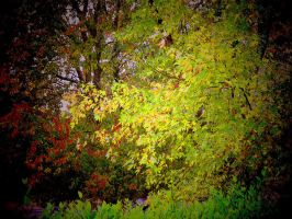 Autumn Colors in Bad Weather by Tailgun2009