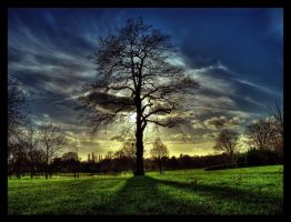 Tree of light by tomaplaw
