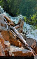 Driftwood From the Animas River by DamselStock