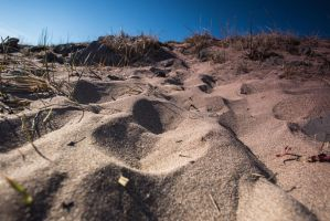Mini Dunes by BusterBrownBB