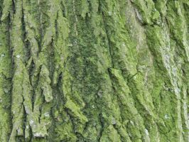 wood_texture_11 by pebe1234