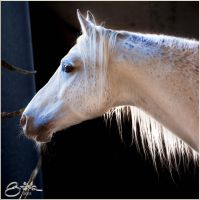 at the morning by brijome