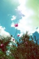 flower and sky by Letterbomb21