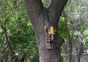Squirrel on feeder by MuggleHater