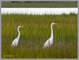 Two of Egrets by Mogrianne