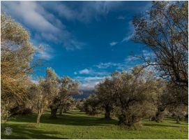 Tatoi 2015 00015a by etsap