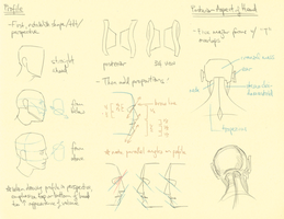 Hampton p.78-81: Head Profile + Posterior by theThirdCartel
