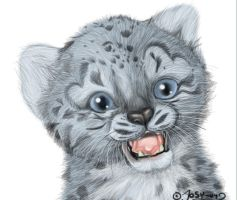 Snow Leopard Cub by Feathers-of-Love