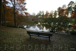 Swan Lake bench by ohmyhii