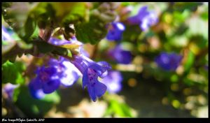 Blue trumpet by TortueBulle