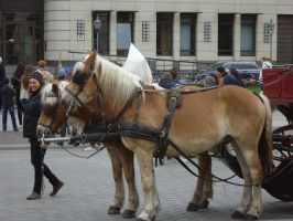 Horse-Drawn Carriage by LeopardSixteen