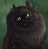 Commission for Shyl3ird - Black Himalayan by SadWhiteRaven