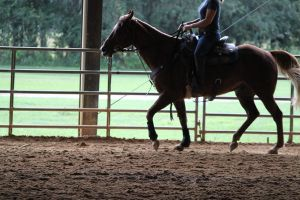 Working Light Breed Stock 5 by OceanLore