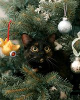 Cat in a Christmas Tree by faeriefly