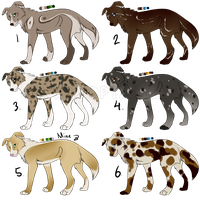 Border collie adoptables -ONE LEFT by Ivey-Kat