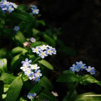 small and blue. by Kaja-kgr