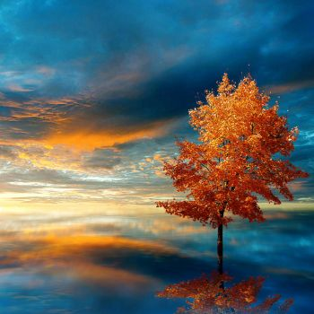 Blue Autumn by JacqChristiaan