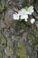 Ornamental Tree III by LadyRStock