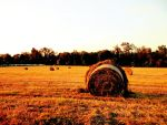 Country Field by TemariAtaje