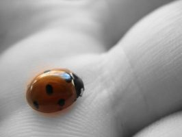 Lady Bug by ihearvoices765
