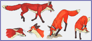 Assorted Foxyness by ComradeK
