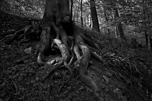 roots by mirop