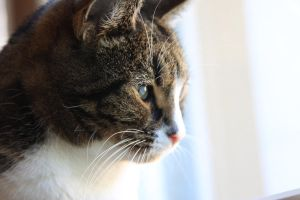 Cat Looking Out of the Window by KalmaKim