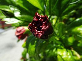 Deep Red Flower by BananaGosip808