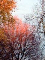 fall.gold.dust by coolingj7j77