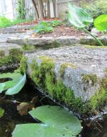 Stepping Stones and Liliypads by KLN-loves-fish