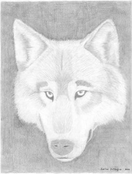 The Wolf by Dumegg