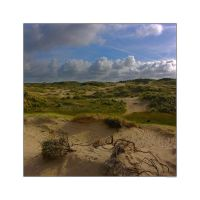 Dunes at Wassenaar by sandor-laza