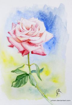 Watercolour Rose by Juhani
