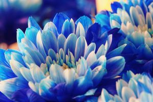Blue for you by Chaachaa