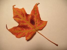Fall Leaf-2 by Rubyfire14-Stock